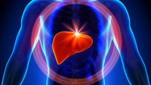 fungsi hati brainly,sebutkan fungsi hati,fungsi hati, kecuali,fungsi empedu,kesehatan fungsi hati,pernyataan berikut yang tidak berhubungan dengan fungsi hati adalah,fungsi hati dalam sistem pencernaan,diantara pernyataan tersebut yang sesuai dengan fungsi,fungsi hati adalah