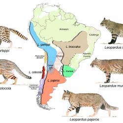 Pengertian Karnivora Dan Contohnya,Pengertian Karnivora,pengertian herbivora,contoh hewan herbivora, karnivora omnivora,hewan omnivora adalah hewan yang memakan,contoh hewan karnivora brainly,hewan karnivora ditunjukkan oleh nomor,manusia pemakan daging disebut,ordo carnivora,omnivora adalah hewan pemakan